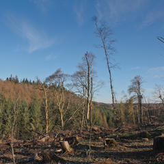 Deforested view